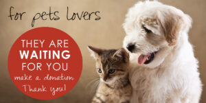 Travel and Shop Experience - Box Pets lovers